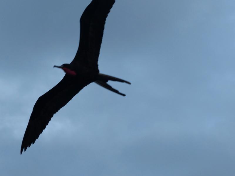 Lipette : Voyage en Guadeloupe P1450557