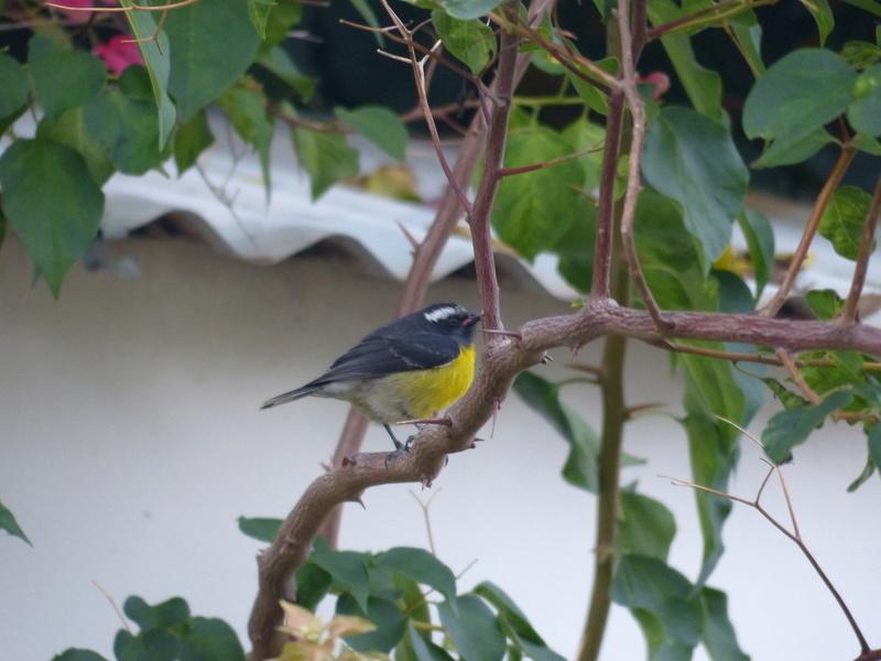 Lipette : Voyage en Guadeloupe P1450558