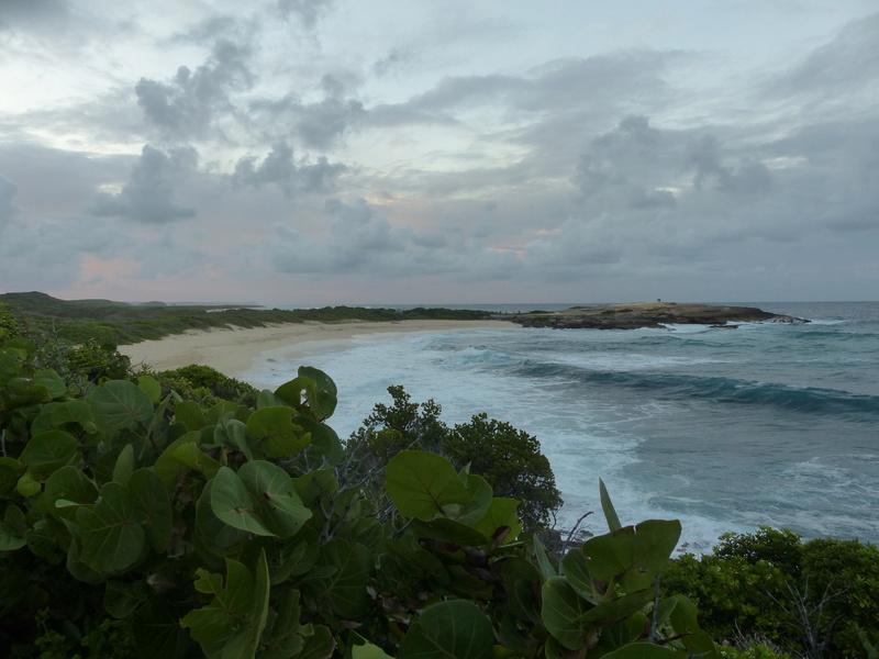 Lipette : Voyage en Guadeloupe P1450612