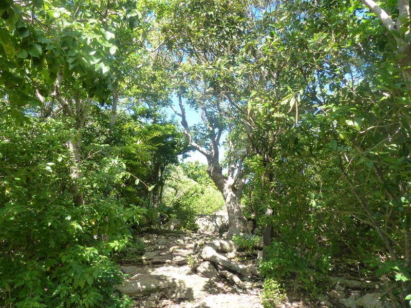 Lipette : Voyage en Guadeloupe P1450637