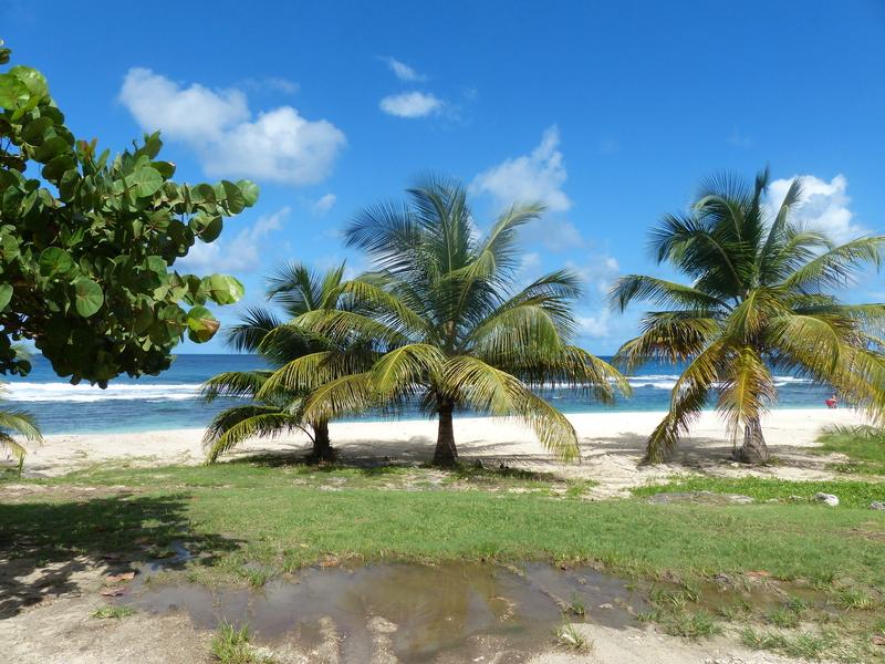 Lipette : Voyage en Guadeloupe P1450650