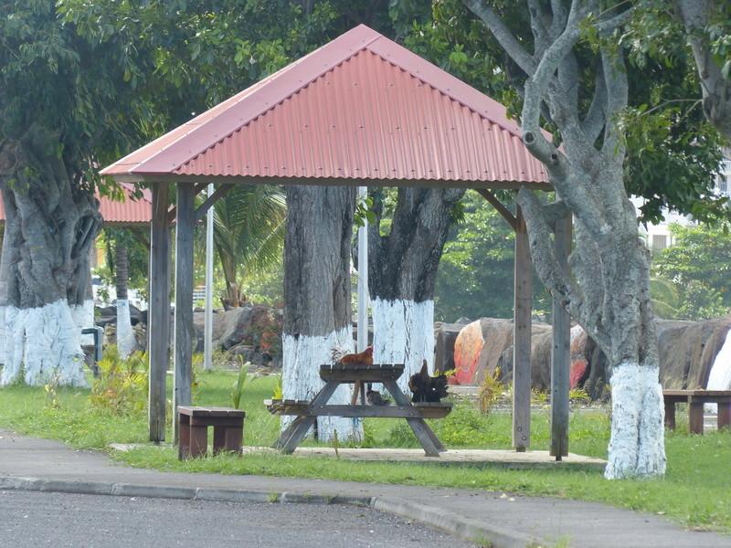 Lipette : Voyage en Guadeloupe P1450654
