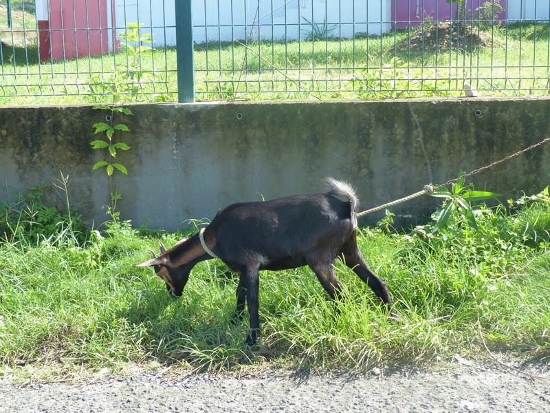 Lipette : Voyage en Guadeloupe P1450665