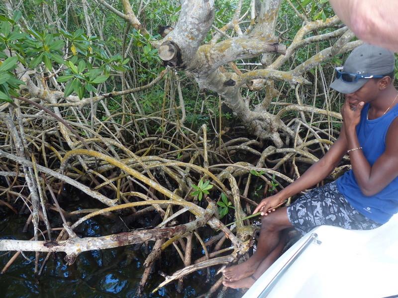 Lipette : Voyage en Guadeloupe P1450718