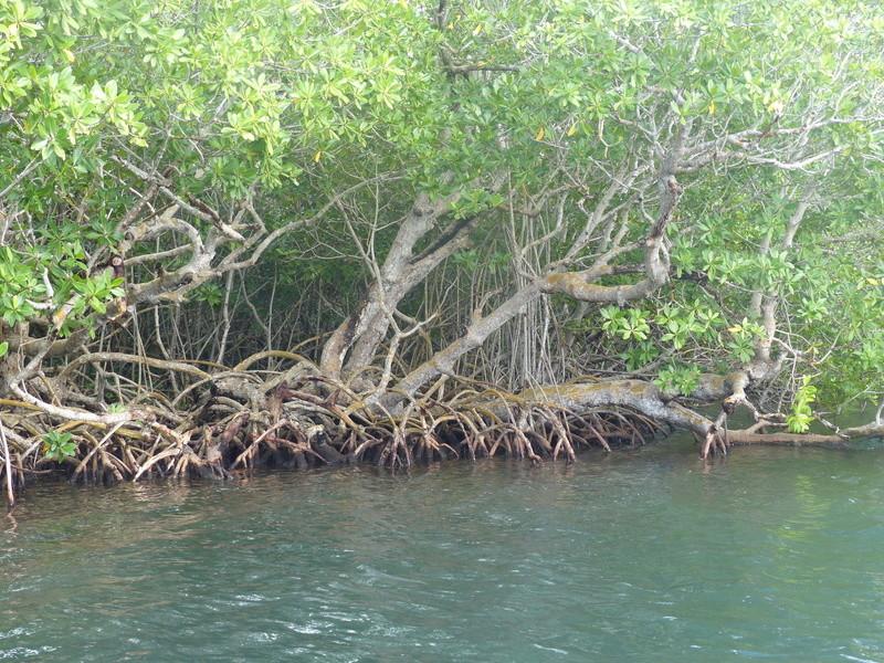 Lipette : Voyage en Guadeloupe P1450719