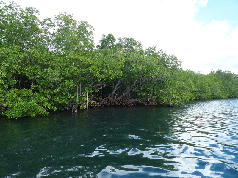 Lipette : Voyage en Guadeloupe P1450721