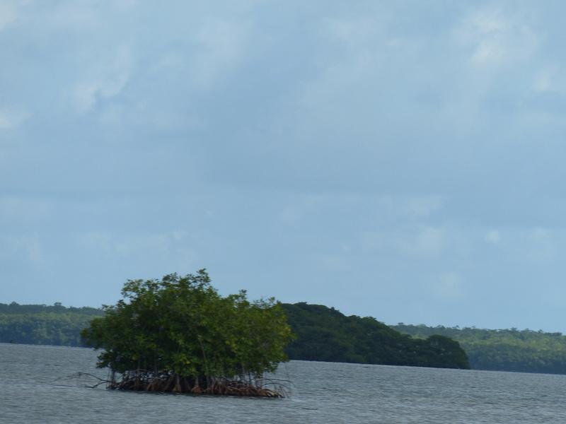 Lipette : Voyage en Guadeloupe P1450729