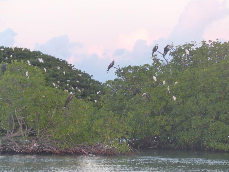 Lipette : Voyage en Guadeloupe P1450762