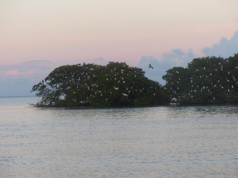 Lipette : Voyage en Guadeloupe P1450765