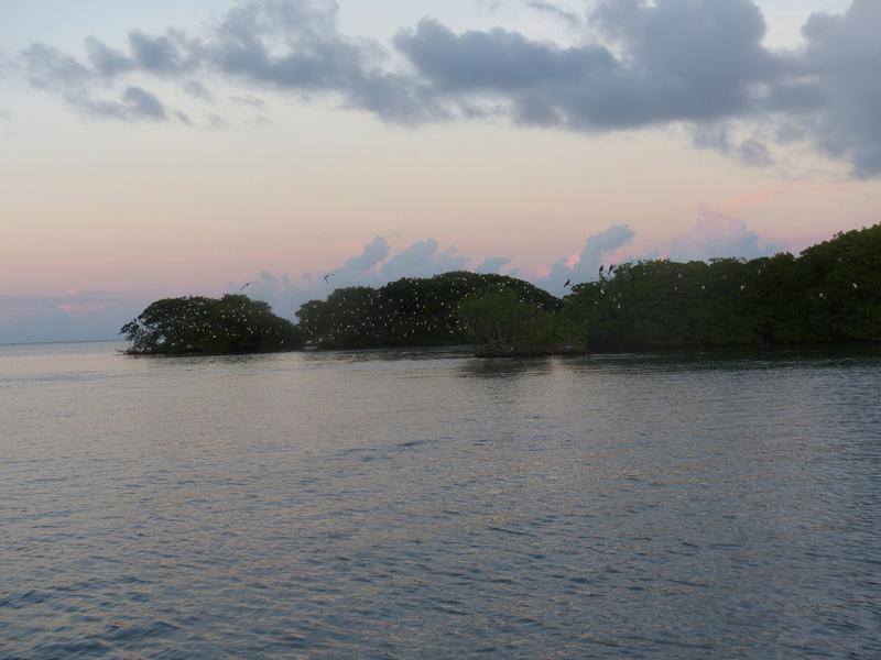 Lipette : Voyage en Guadeloupe P1450770