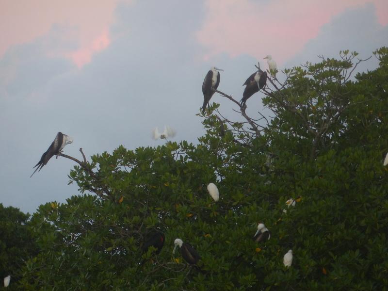 Lipette : Voyage en Guadeloupe P1450771