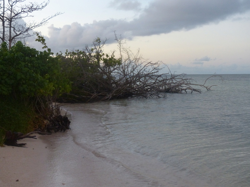 Lipette : Voyage en Guadeloupe P1450776