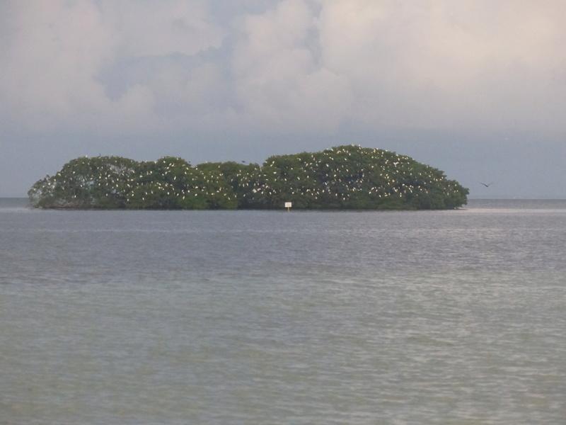 Lipette : Voyage en Guadeloupe P1450812
