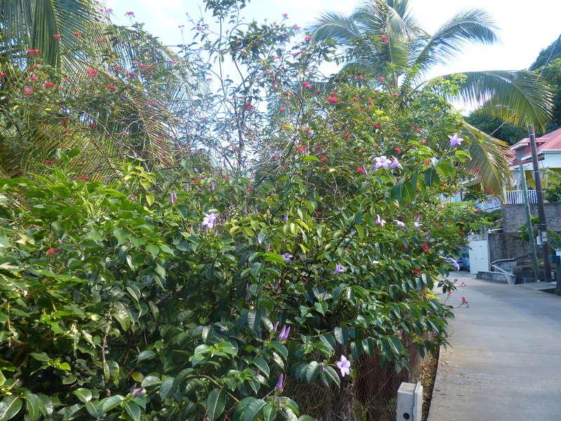 Lipette : Voyage en Guadeloupe P1450839