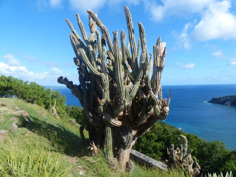 Lipette : Voyage en Guadeloupe P1450912
