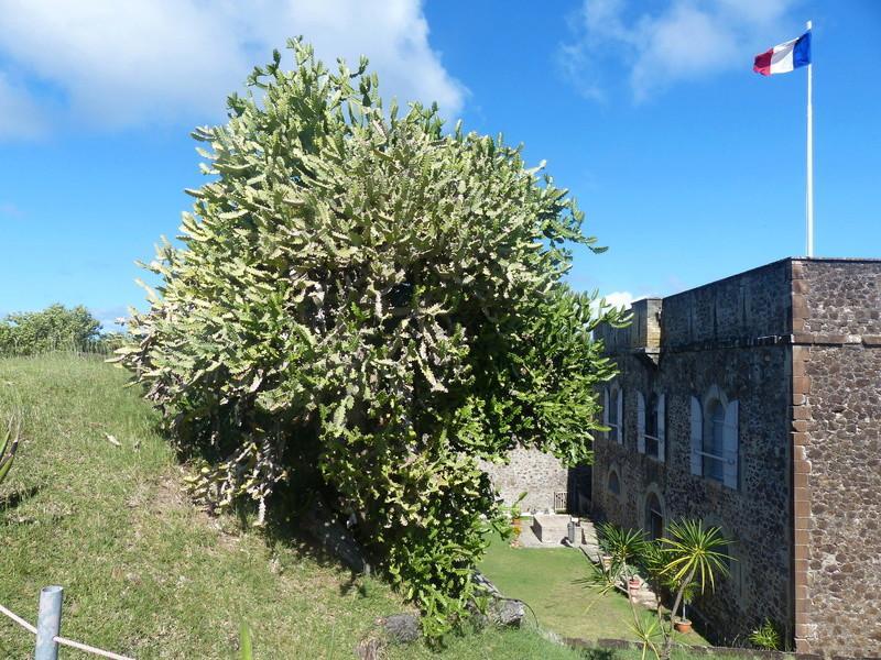 Lipette : Voyage en Guadeloupe P1450913