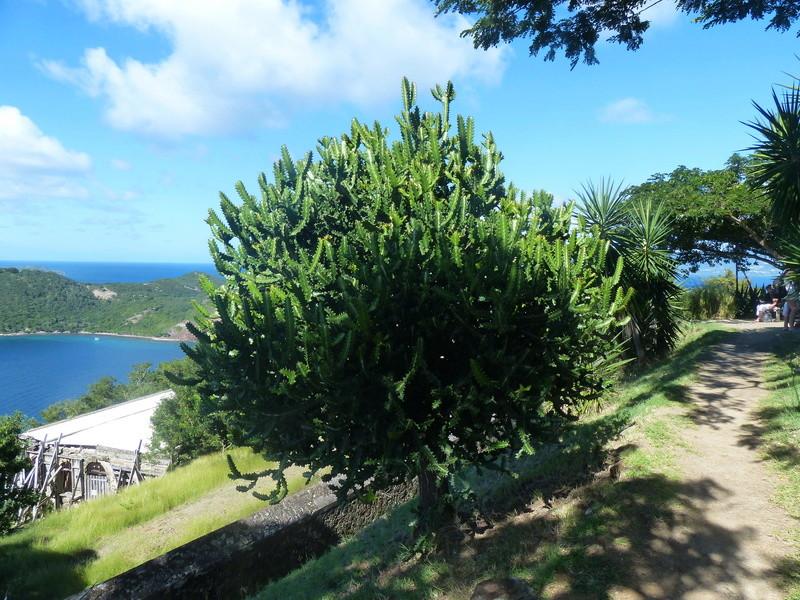 Lipette : Voyage en Guadeloupe P1450916