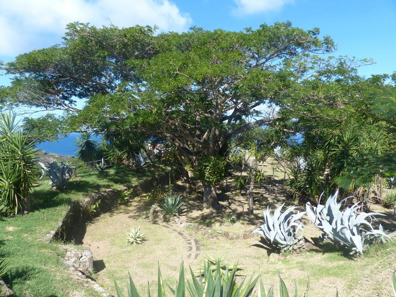 Lipette : Voyage en Guadeloupe P1450918