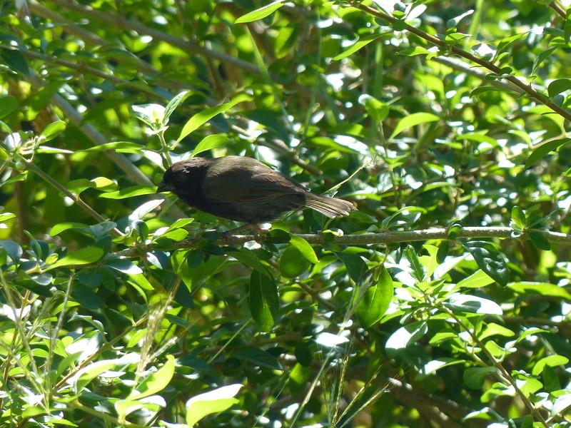 Lipette : Voyage en Guadeloupe P1450935