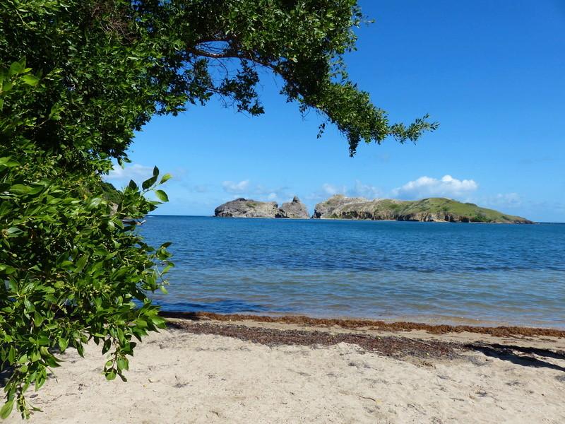 Lipette : Voyage en Guadeloupe P1460030