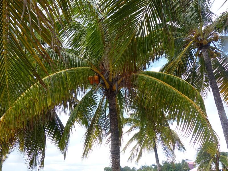Lipette : Voyage en Guadeloupe - Page 4 P1470118