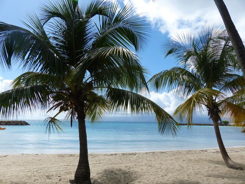 Lipette : Voyage en Guadeloupe - Page 4 P1470123