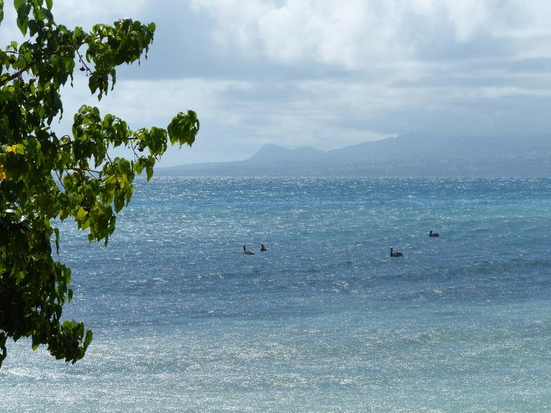 Lipette : Voyage en Guadeloupe - Page 4 P1470125