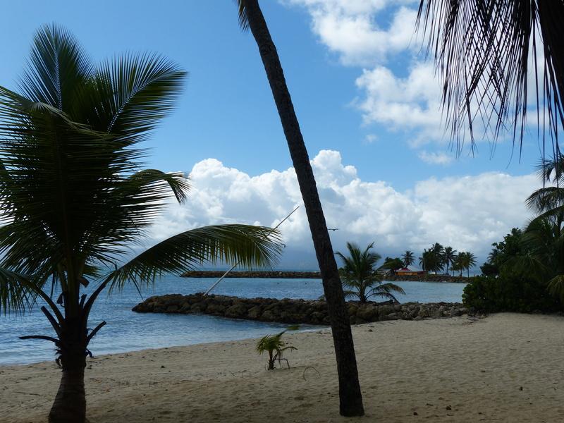 Lipette : Voyage en Guadeloupe - Page 4 P1470126
