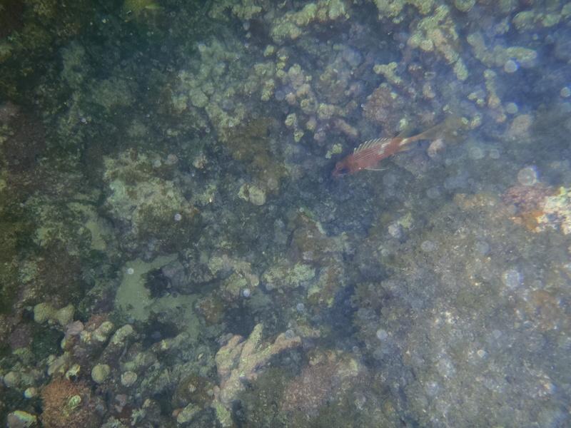 Lipette : Voyage en Guadeloupe Pc020024