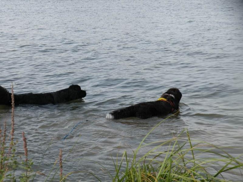 DINOS: le ruban jaune pour les chiens qui ont besoin d'espace  - Page 3 Redime18