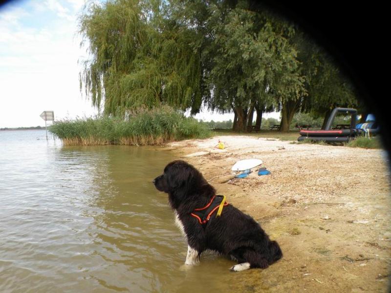 DINOS: le ruban jaune pour les chiens qui ont besoin d'espace  - Page 3 Redime20
