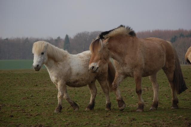 cohabitation chevaux-shetland : est-ce possible ? - Page 2 Divers12