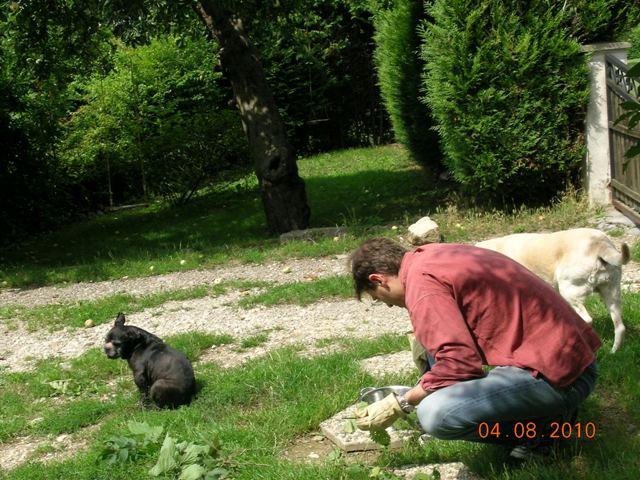 Mes aventures au jardin (9 août 2010) 2webgr11