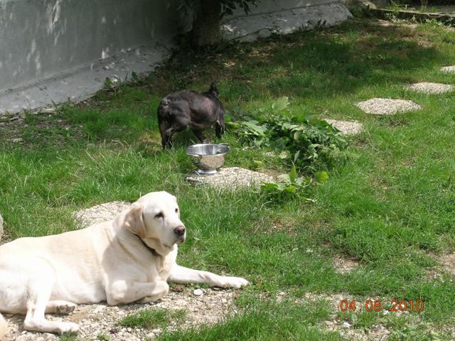 Mes aventures au jardin (9 août 2010) 3webgr11