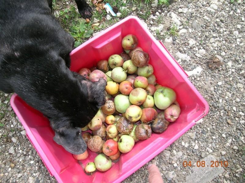 Mes aventures au jardin (9 août 2010) Dscn1814
