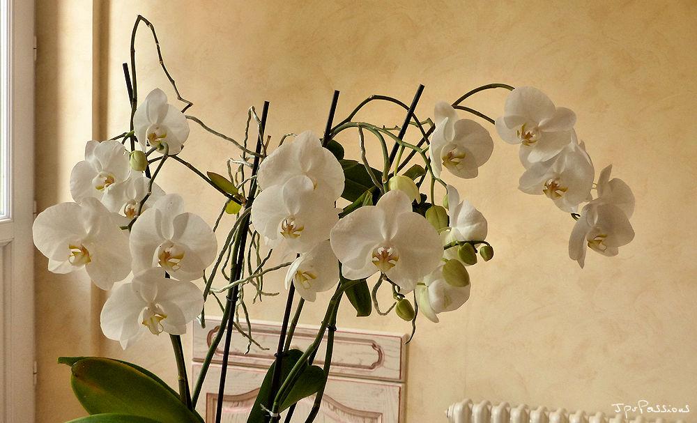 Keikis en fleurs P1360813