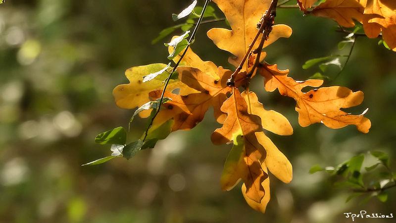 un petit bout d'automne P1380314