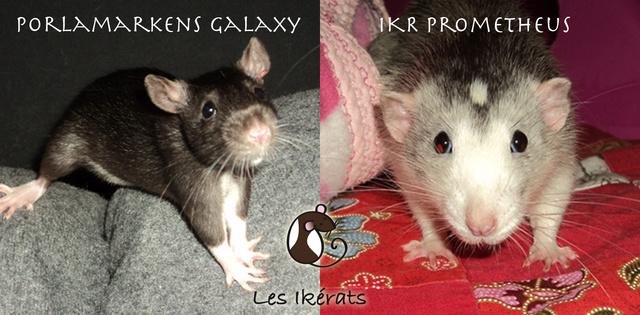 IKR Prometheus x Porlamarkens Galaxy Promo-10