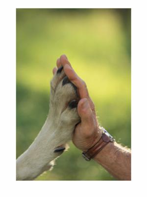 DECLARATION UNIVERSELLE DES DROITS DE L ANIMAL 53897210