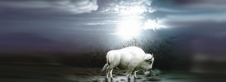 ESPOIR DE GROSSESSE Bison_10