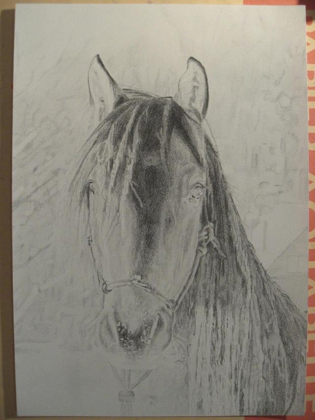 Dessin/portrait de vous ou votre cheval Cheval11
