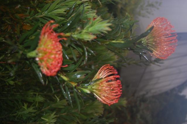 Fleurs & Plantes d'Équateur Copie_13