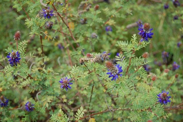 Fleurs & Plantes d'Équateur Copie_14