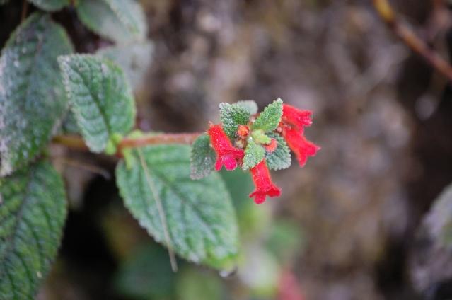 Fleurs & Plantes d'Équateur Dsc_5211