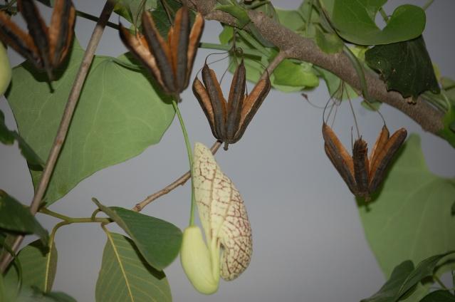 Fleurs & Plantes d'Équateur Dsc_6410