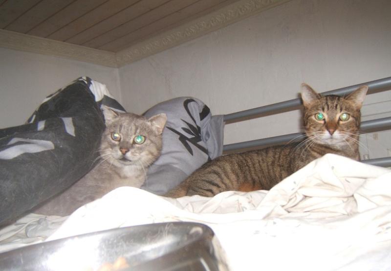 Cartouche, chat gris sauvage Dscf5611