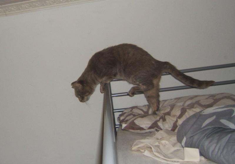 Cartouche, chat gris sauvage Dscf5613