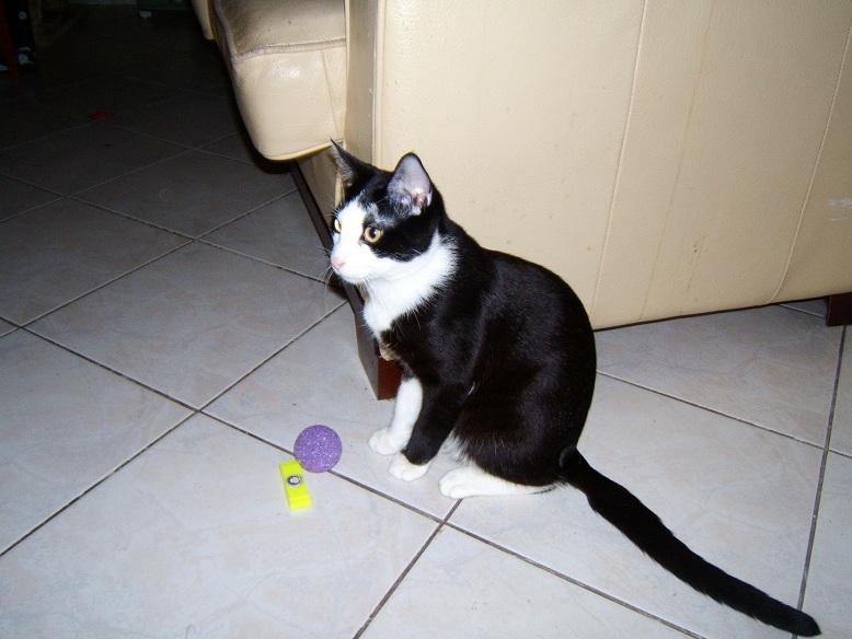 Lilas, 8 mois, et ses 5 chatons née le 29/05/2010 Dscf6511
