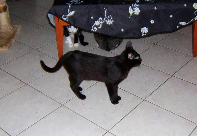 Lilas, 8 mois, et ses 5 chatons née le 29/05/2010 Dscf6610
