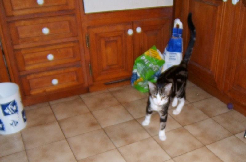 Lilas, 8 mois, et ses 5 chatons née le 29/05/2010 Dscf6611